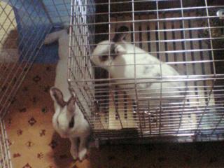 ユメ&ミミ