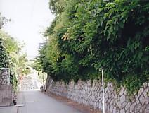 曳馬城・北側の道