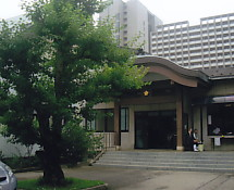 西福寺・杏の木