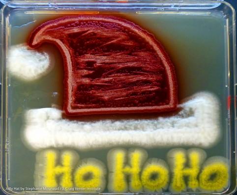 Santa-Hat-482x397.jpg