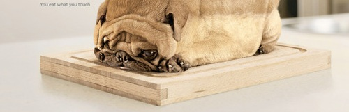 You-Eat-What-You-Touch-Pug1.jpg
