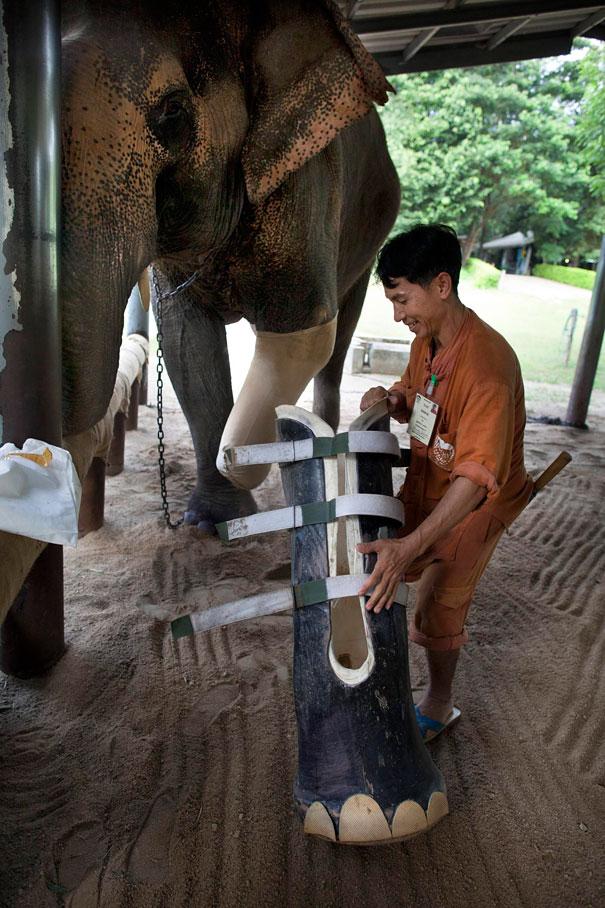 animal-prosthetics-3.jpg