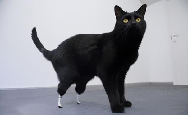 animal-prosthetics-5-1.jpg