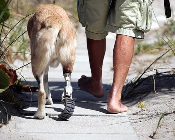 animal-prosthetics-8-1.jpg