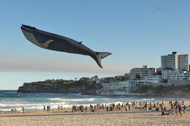 blue-whale-kite-1.jpg