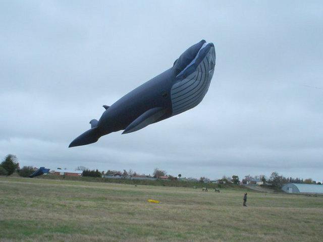 blue-whale-kite-5.jpg