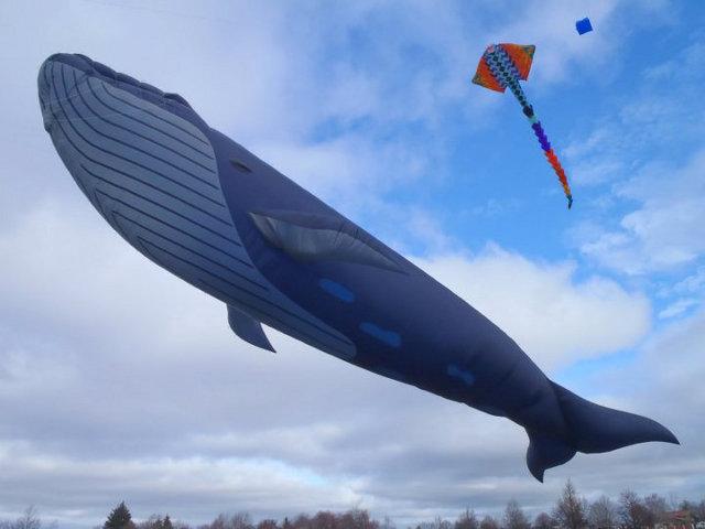 blue-whale-kite-6.jpg
