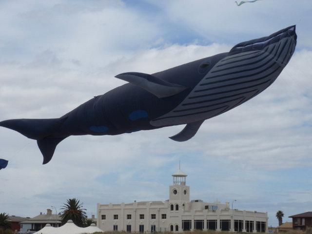 blue-whale-kite-9.jpg