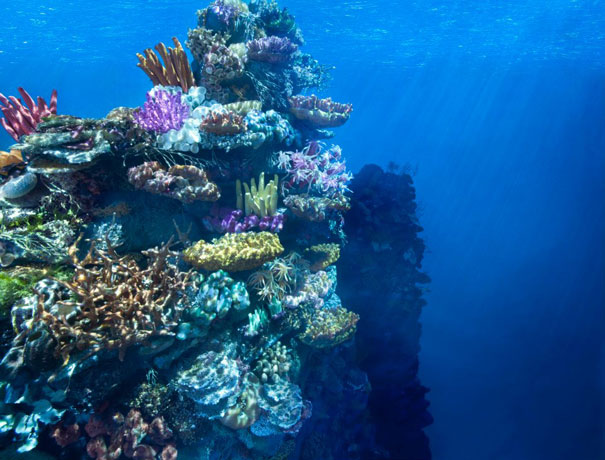 diorama-strange-worlds-coral-reef-matthew-albanese-1.jpg