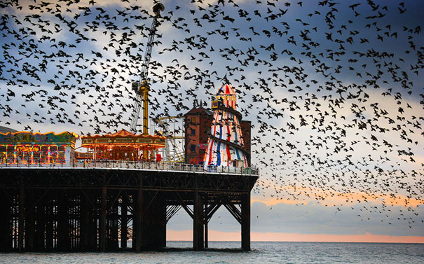 murmuration-of-starlings-11.jpg
