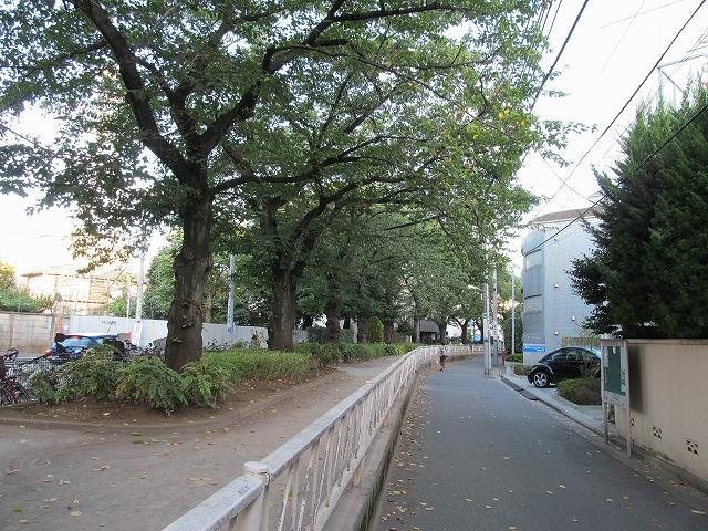 呑川遊歩道
