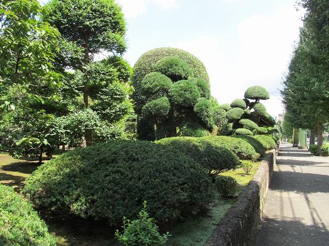 見事な庭木_1