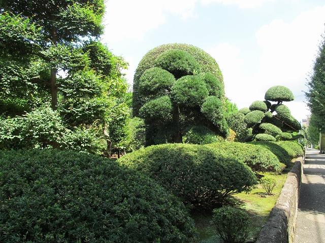 見事な庭木_2