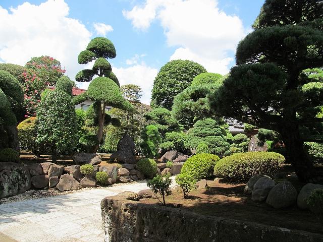 見事な庭木_5