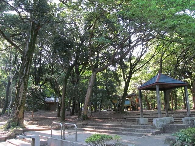 幼児コーナー辺りの木々