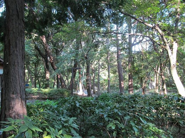 南門前の道辺りの木々