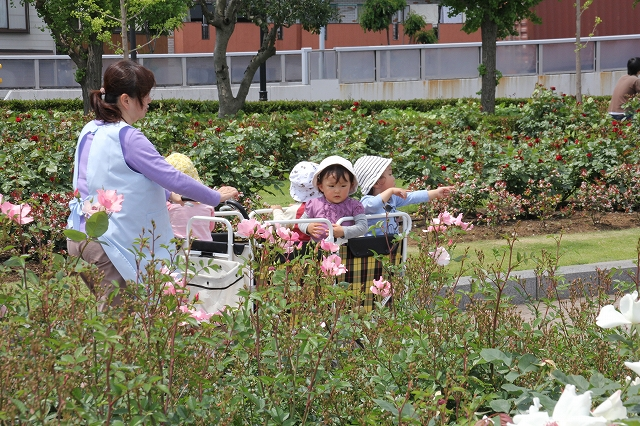 バラが咲き乱れる公園をのんびりお散歩_1