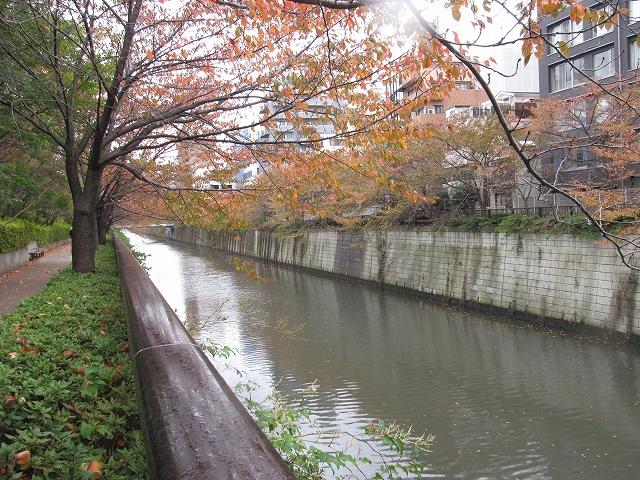 目黒川の流れ_3