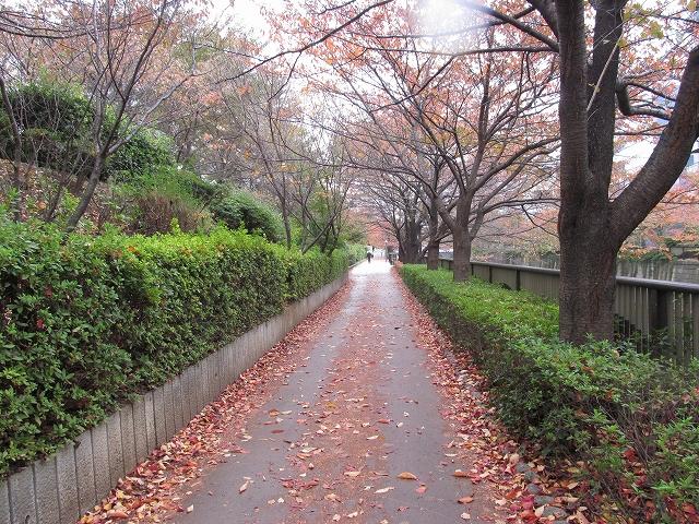 目黒川沿いの歩道_2