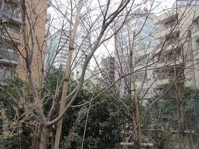 桜と思しき樹木_4