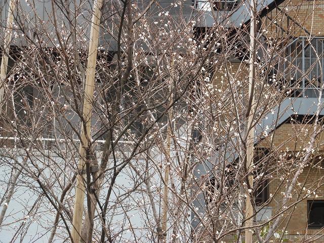 桜と思しき樹木_2