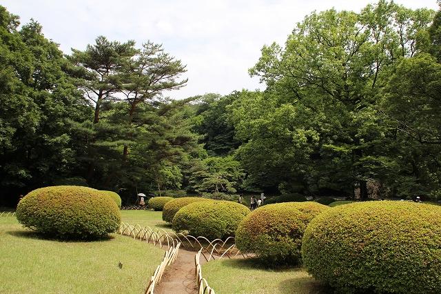 前庭の躑躅の植え込み_3