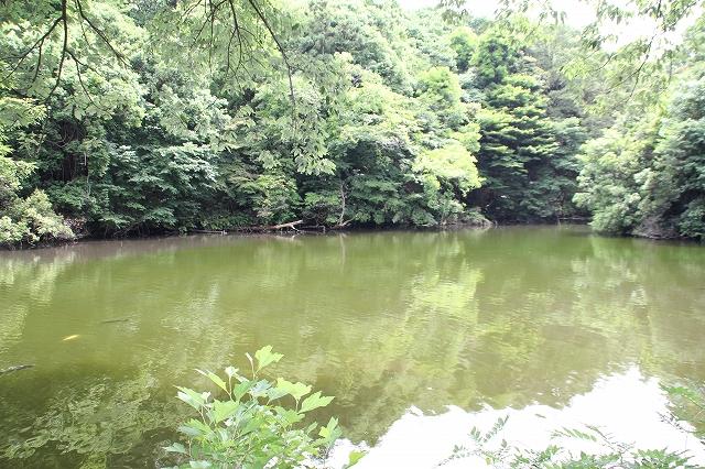 南池の様子_2