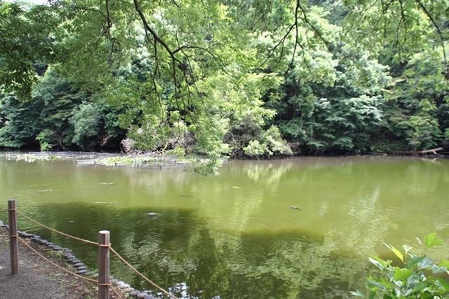 南池の様子_3