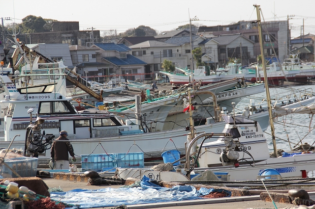漁港の様子_5