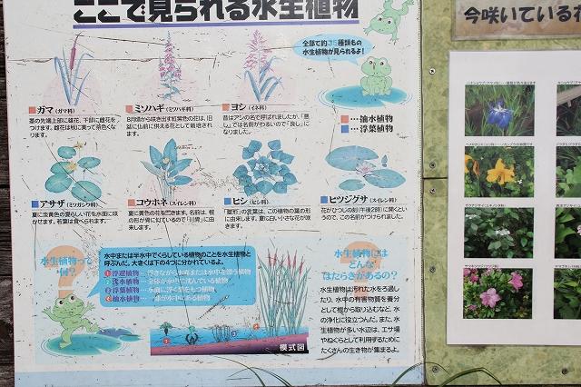 水生植物のゾーン_2