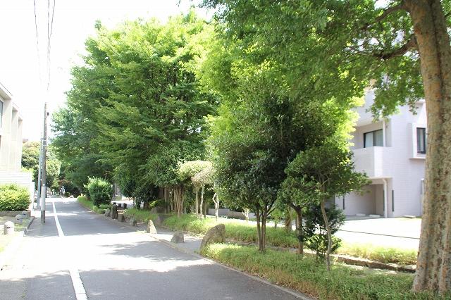 呑川柿の木坂支流緑道_1