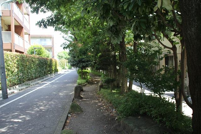 呑川柿の木坂支流緑道_2
