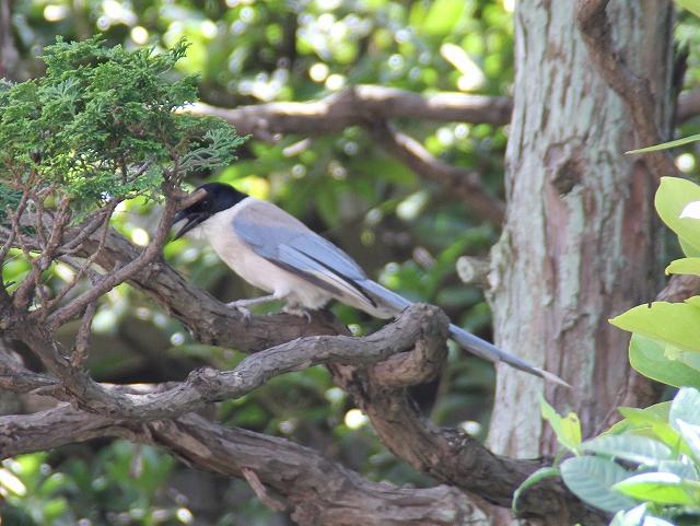 尾が長いあまり大きくはない野鳥