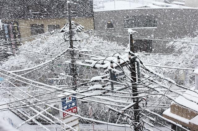 昨日の雪_1