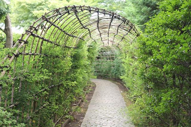 萩のトンネル_2