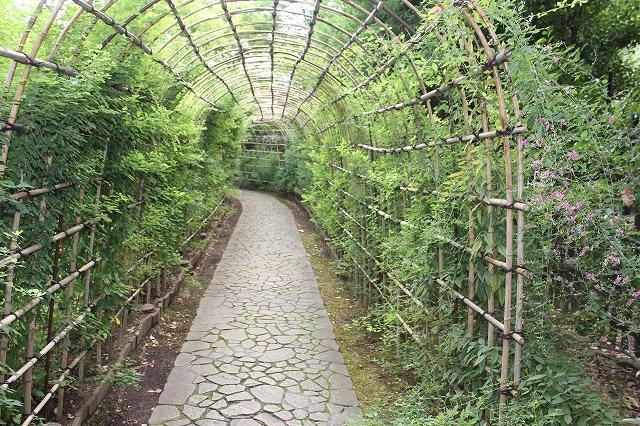 萩のトンネル_4