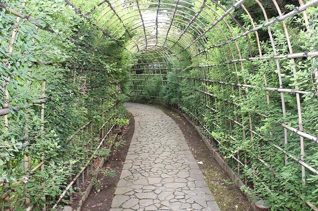 萩のトンネル_5