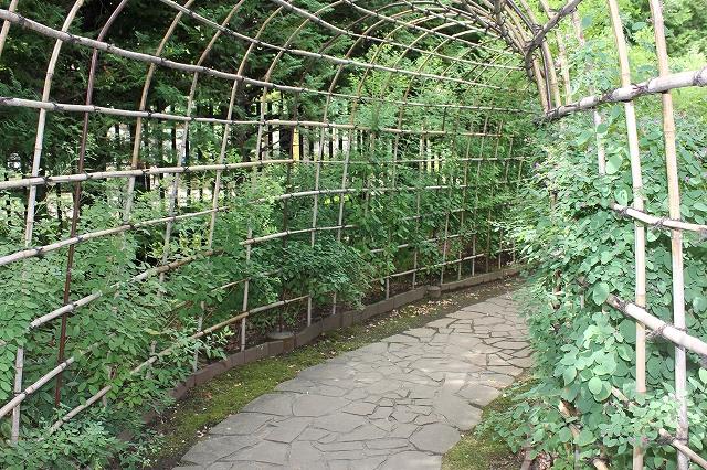 萩のトンネル_7