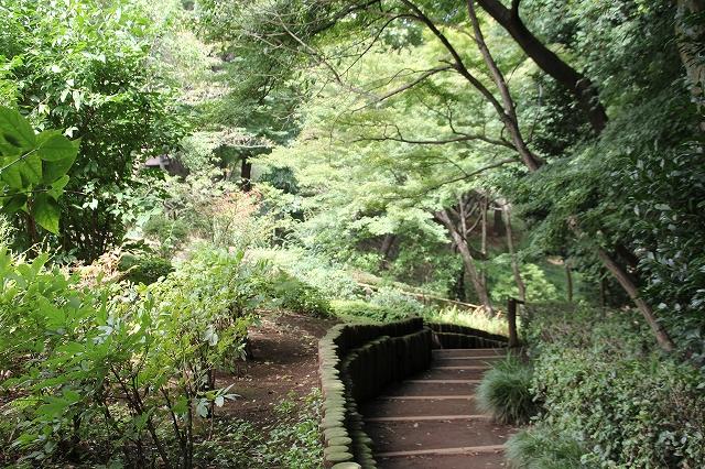 次郎弁天の池へ下る道_1