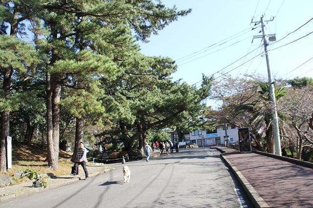 岬へ至る道_6