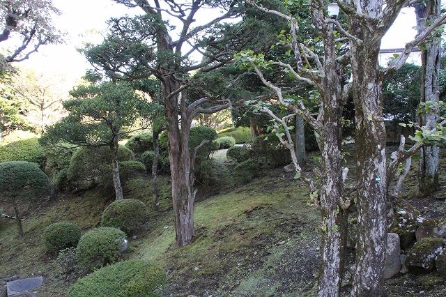 宿の庭_1