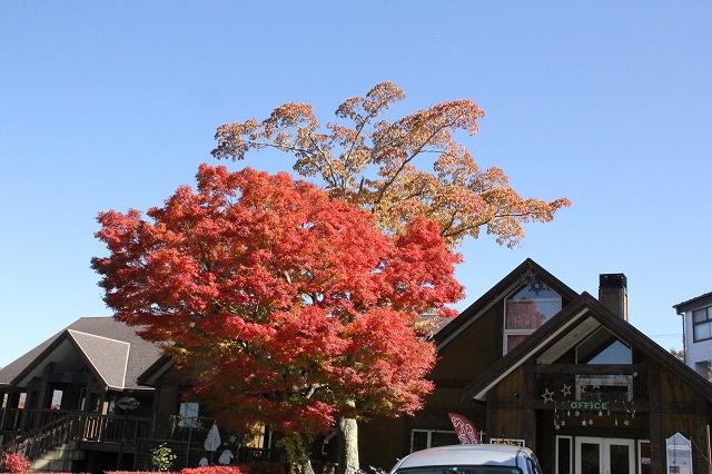 湖畔の道路の紅葉ぶり_1