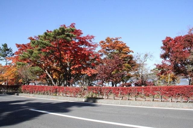 湖畔の道路の紅葉ぶり_2