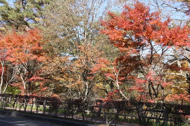 湖畔の道路の紅葉ぶり_3
