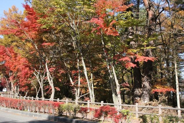 湖畔の道路の紅葉ぶり_4