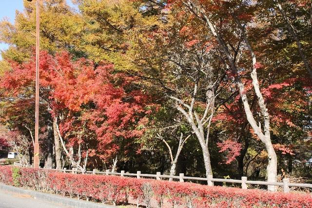 湖畔の道路の紅葉ぶり_5