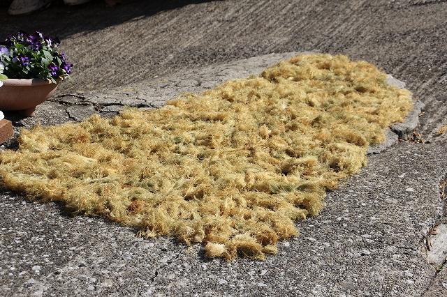 道端に干してあった天草