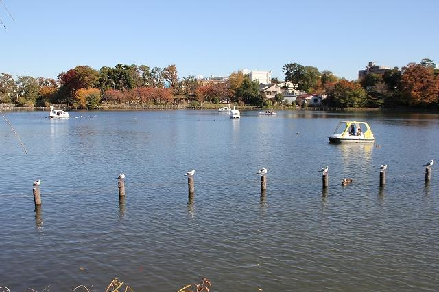 池の様子_3