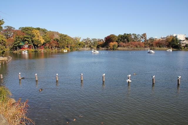 池の様子_4