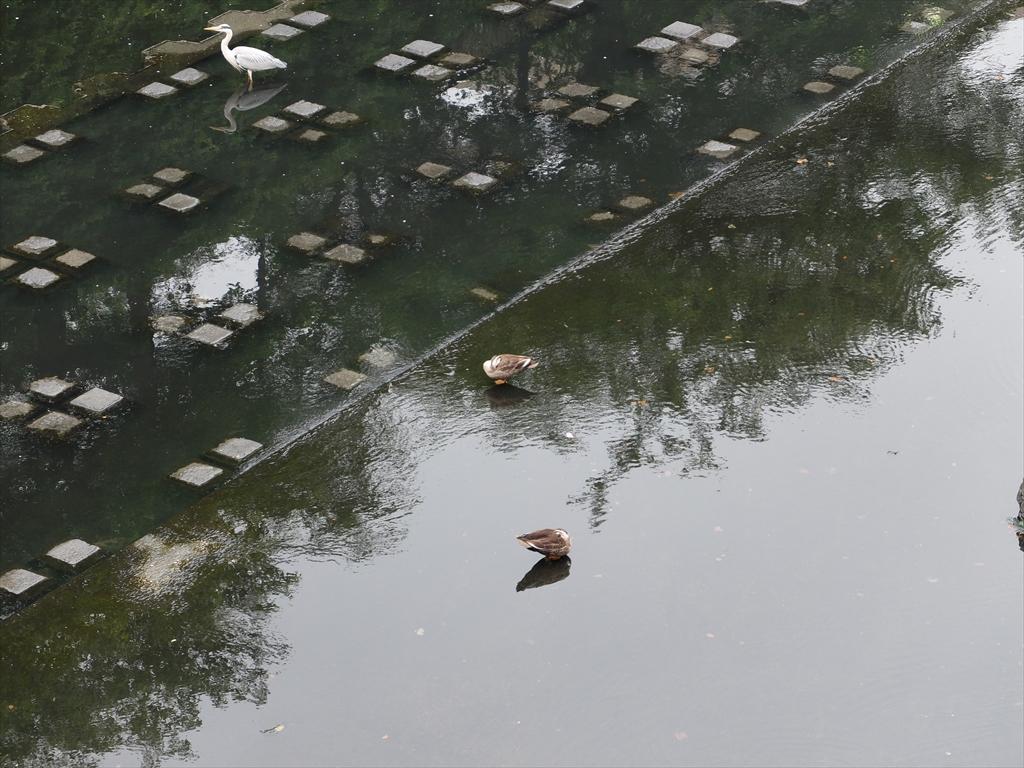 舟入場公園下の目黒川